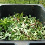gardening-hedge-cutting